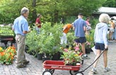 ijams spring plant sale